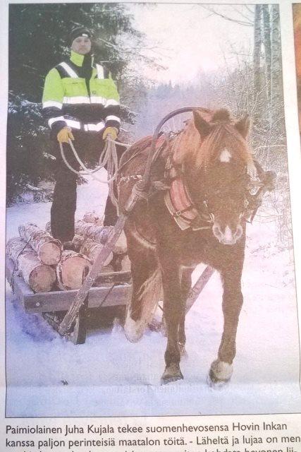 hevoset liikenteessä artikkeli kunnallislehti 23.1.2015