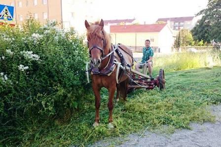 Turku, Tonttumäkeä niittämässä